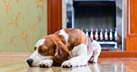 Image Of A Beagle In Front Of A Fireplace