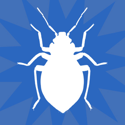 cockroaches, pest control solutions, pest control services