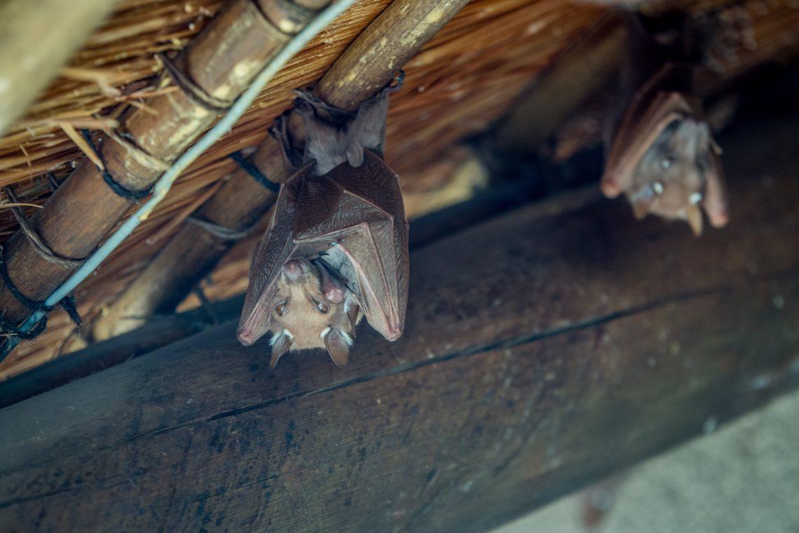 bat control services bat removal services wisconsin