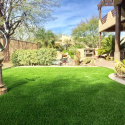 Beautiful grass turf in Phoenix yard by 21st Century Grass