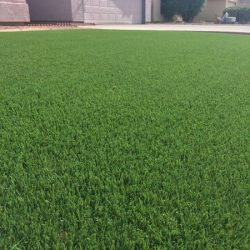 Synthetic lawn in Phoenix by 21st Century Grass