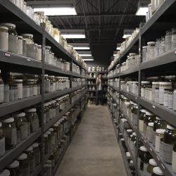 Shelves of petrified reptiles
