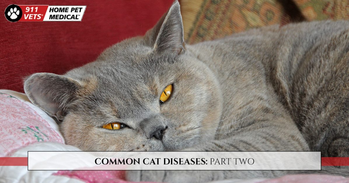Clinic Services - Common Cat Diseases Part Two
