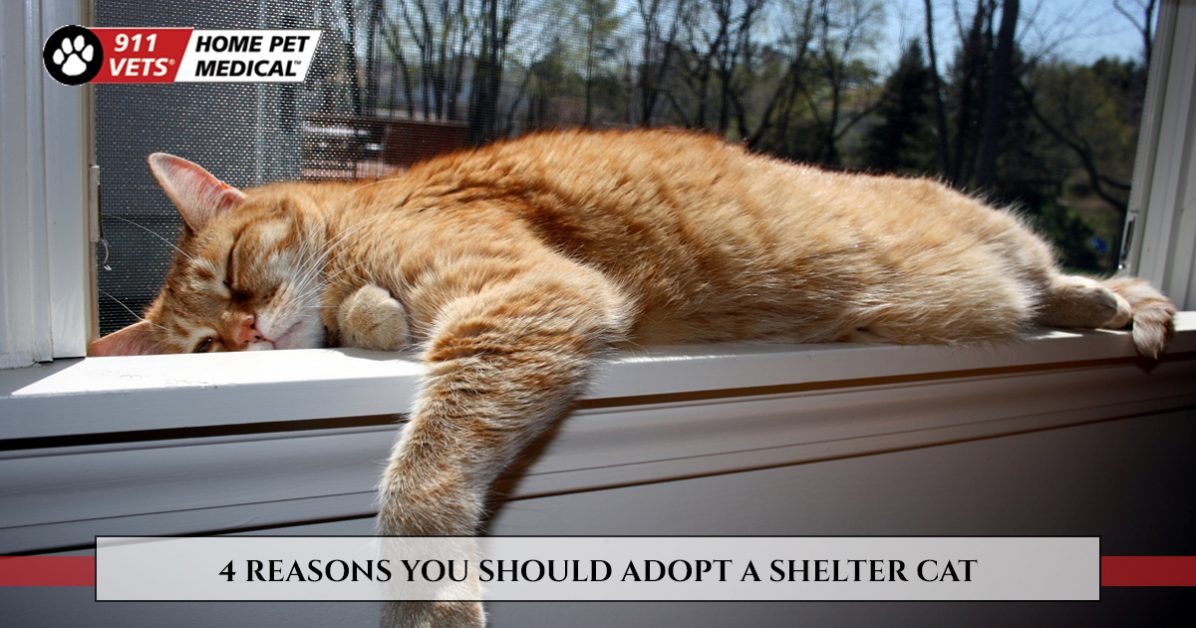 Mobile Veterinary Services - 4 Reasons You Should Adopt A