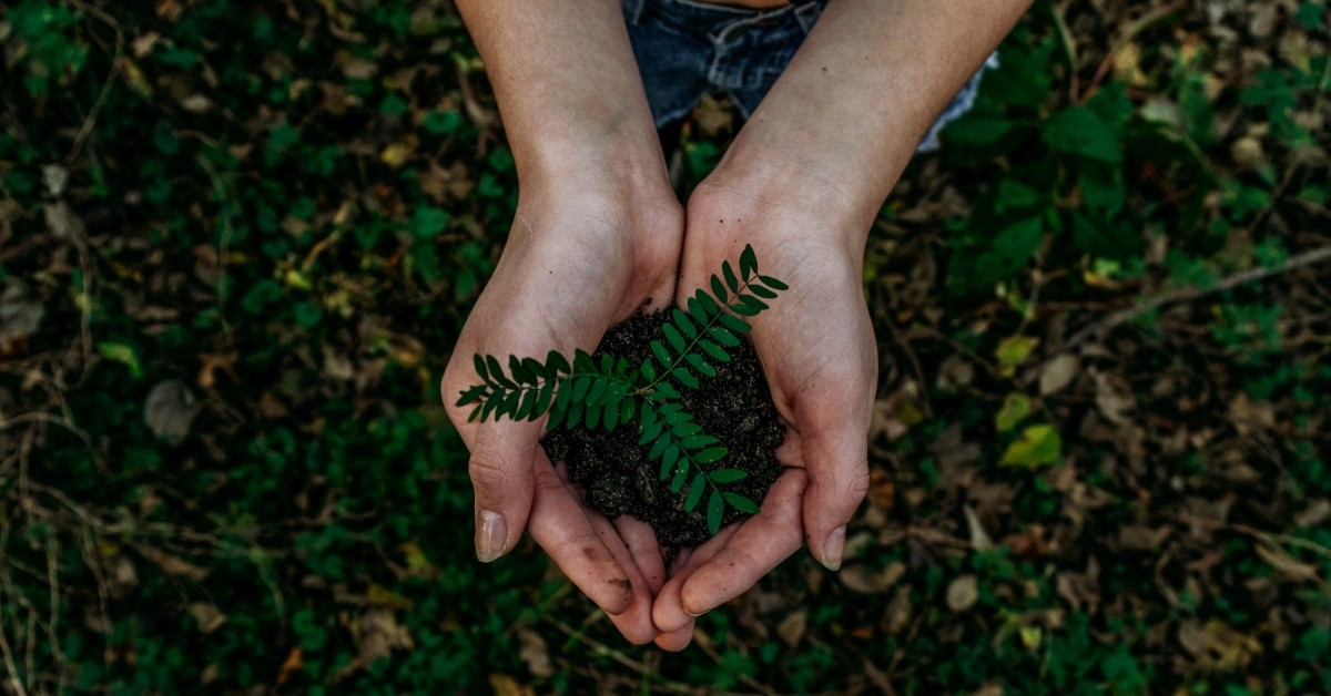 Aerial view of a person holding a small plant in their hands.