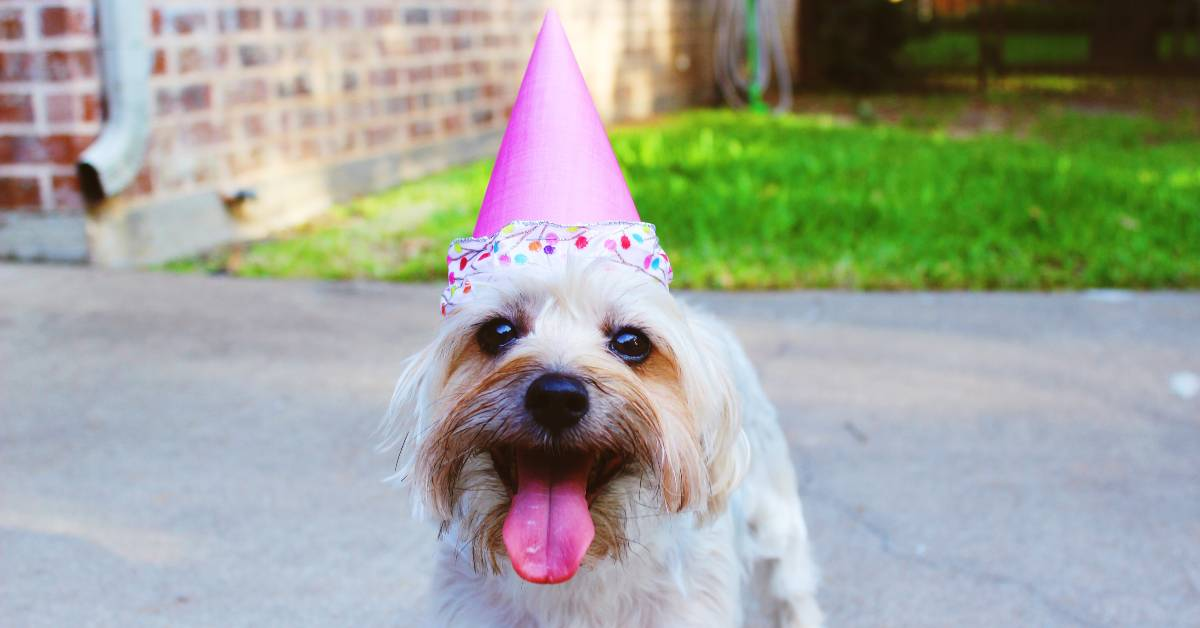 Photo of a dog wearing a party hat on a drivewayby Delaney Dawson on Unsplash