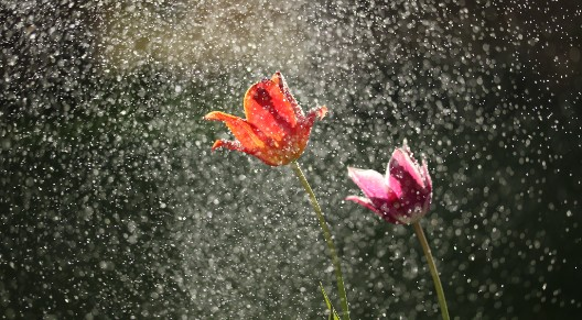 image of flowers in the rain