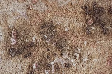 picture of mold