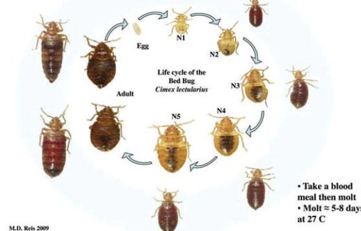 Bed Bug Control Winnipeg Bed Bug Pest Control Manitoba Bed Bug