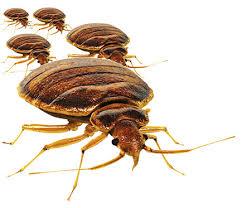 Pest Removal Winnipeg Exterminator Manitoba Home Pest Control