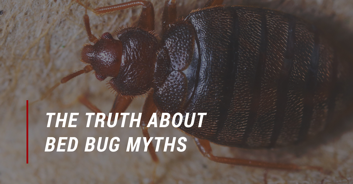 Your bed bug exterminator debugs bed bug myths