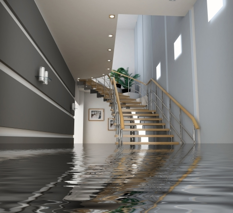 carpet cleaning team helps with water damage in Casper