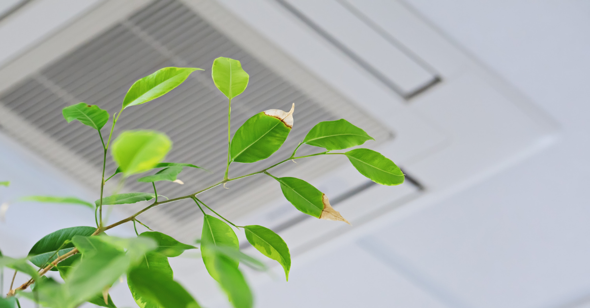 Indoor Air Quality with Whole Home IAQ Solutions