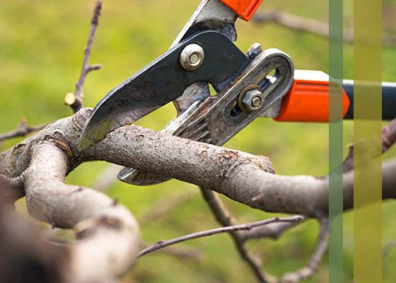 pruningpic