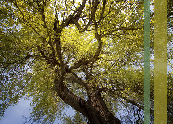 treeassessmentpic