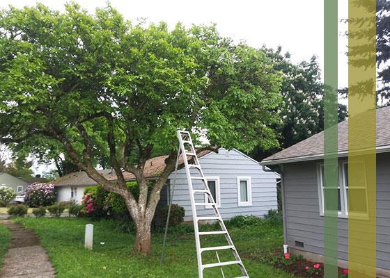 treecareservicespic