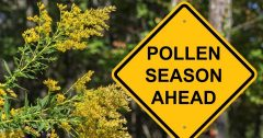 What is pollen, and how can your HVAC system help to reduce it in your home? | G&R Heating and Air