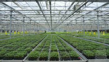 greenhouse-pic