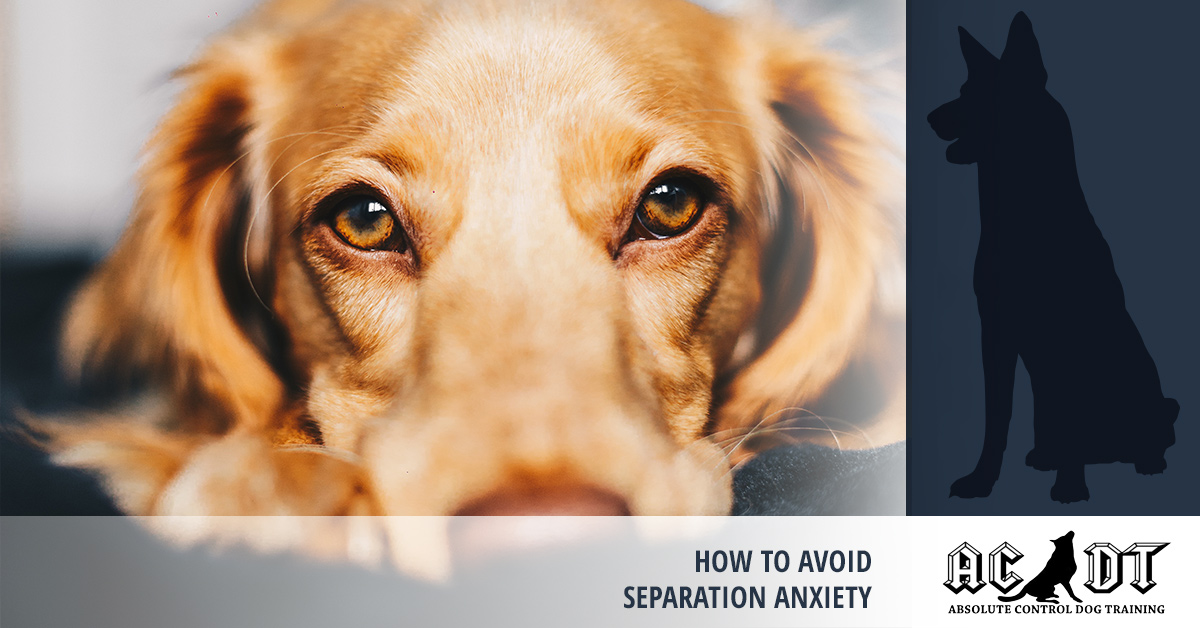 How to avoid separation anxiety in dogs