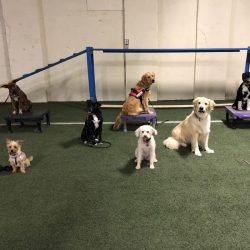Dogs posed on agility course