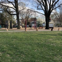 5 dogs in a park waiting for commands