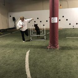 Dog running agility course