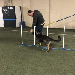 German Shepard running agility course with owner