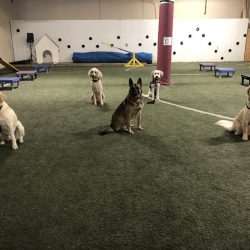 5 dogs sitting in training course