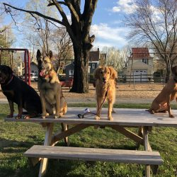 Dogs sitting on a table in a park