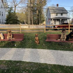 5 dogs in a park sitting on benches