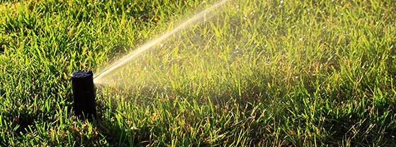 Get Lush Green Grass