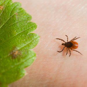 Denver Bed Bug Infestation Treatment Bed Bugs Or Something Else