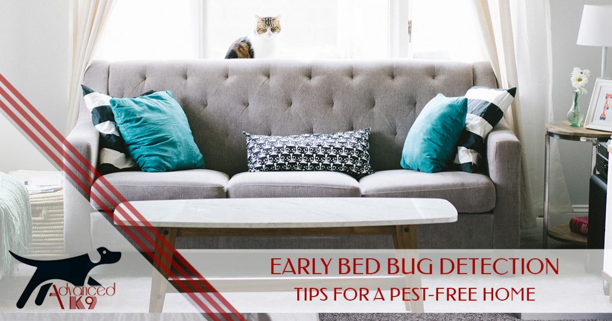 Denver Bed Bug Detection: Early Bed Bug Detection — Tips for