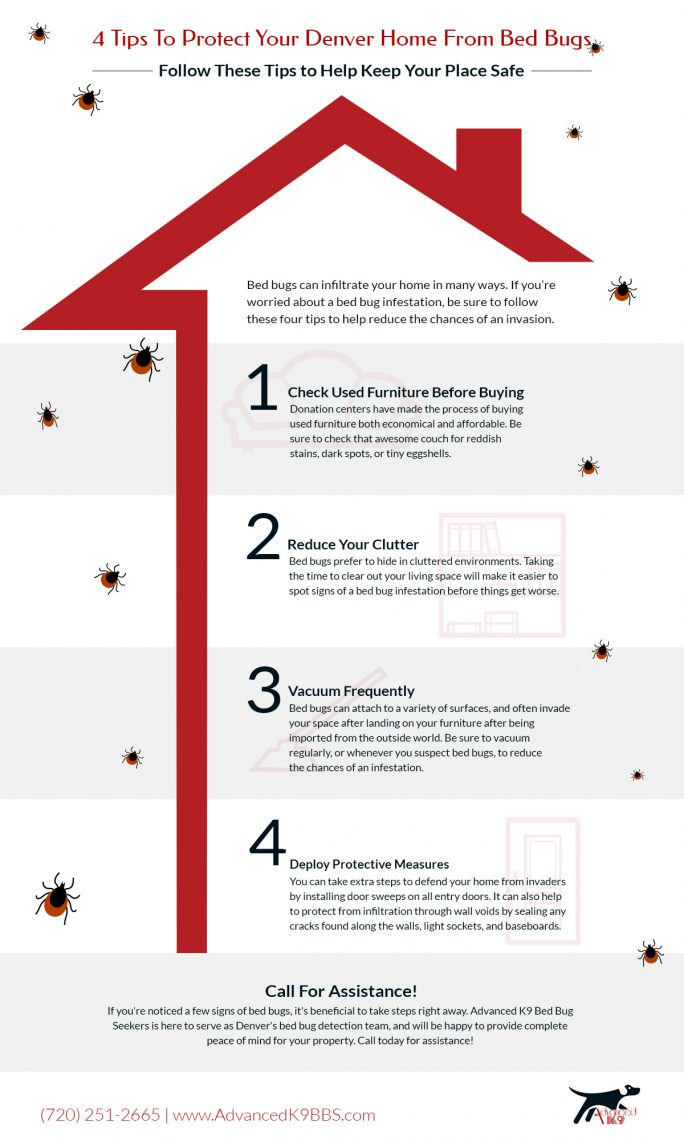 Magnificent Denver Bed Bug Detection Our Team Highlights 4 Tips To Creativecarmelina Interior Chair Design Creativecarmelinacom