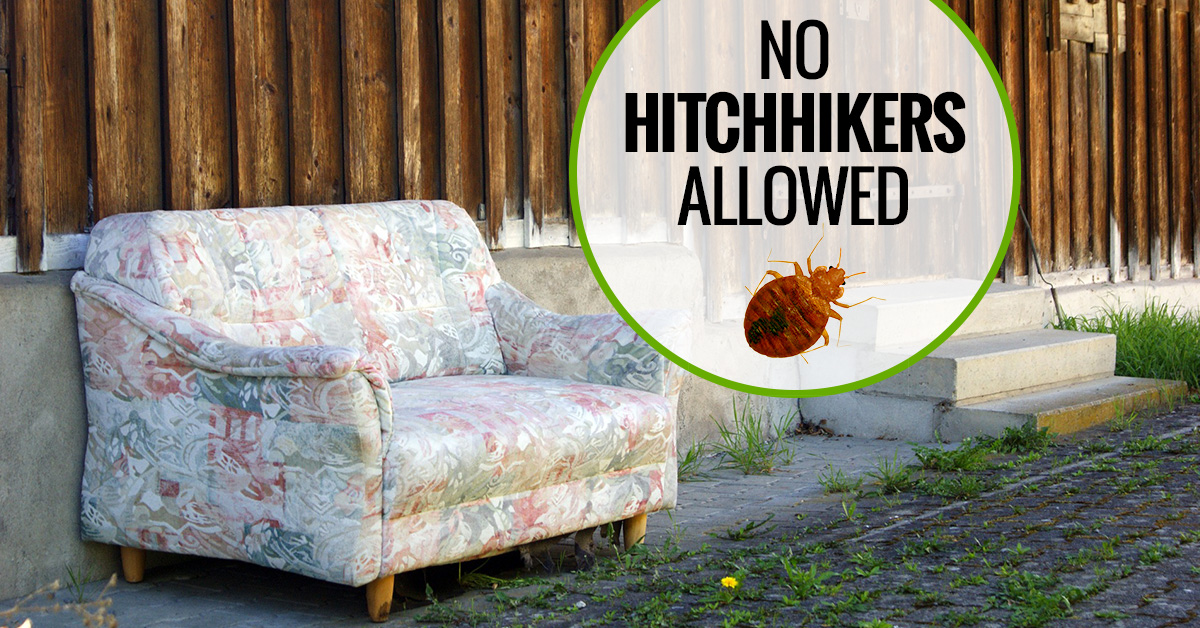 protect-yourself-from-bed-bugs-on-yard-sale-furnitureb