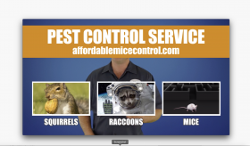 Affordable Rodent Control Pest Mice Rat Control Extermination