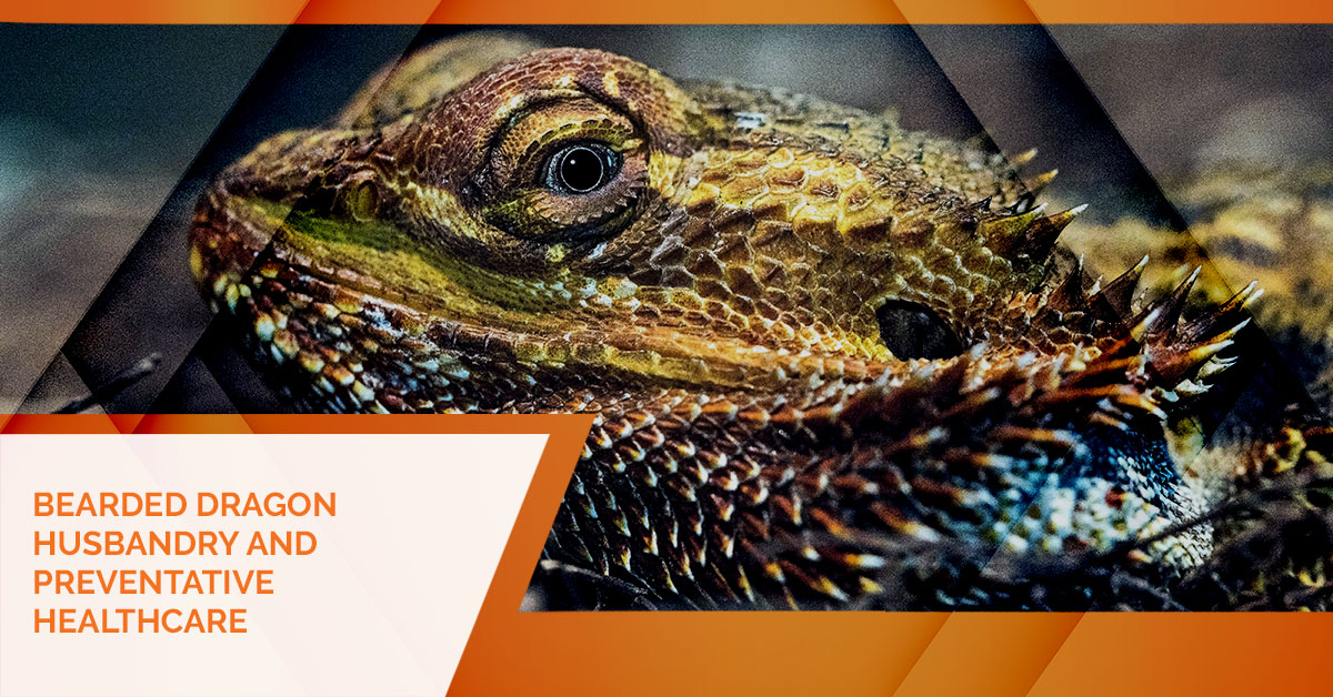 The Best Dark Leafy Greens For Your Bearded Dragon
