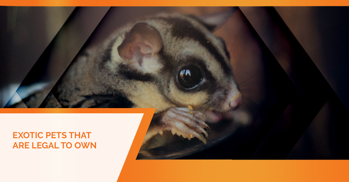 Exotic Animal Vet Sewell Exotic Pets That Are Legal To Own
