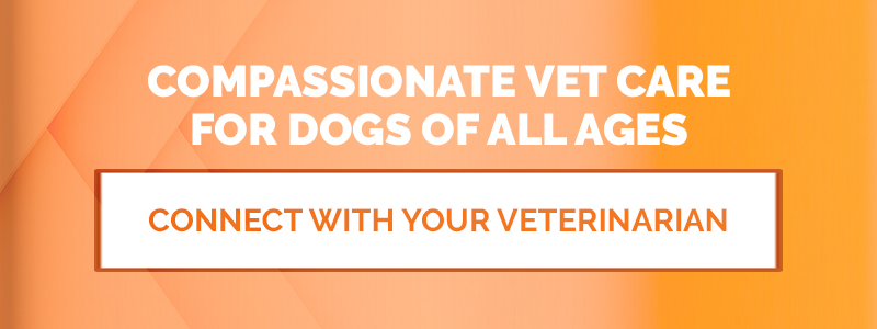 Compassionate Vet Care for Dogs of All Ages