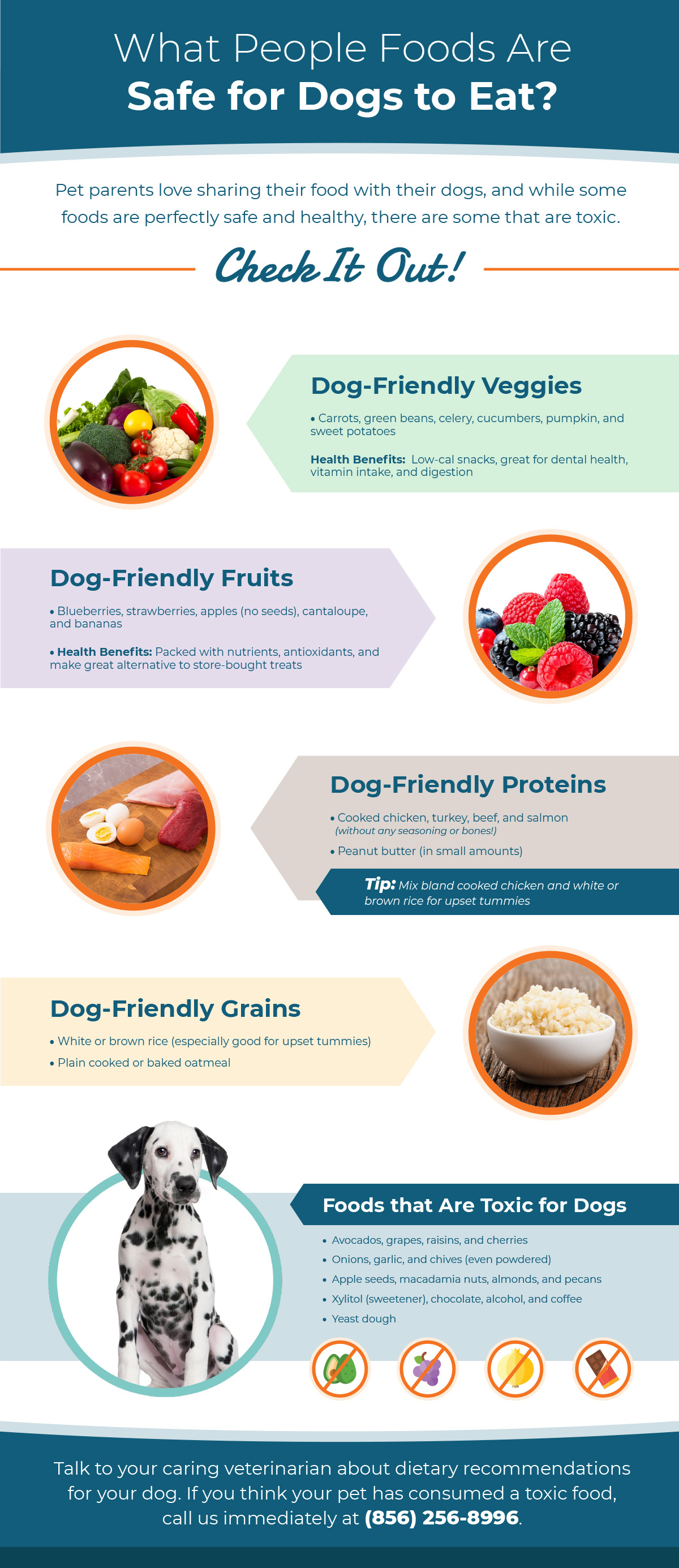 Infograph about safe foods for dogs