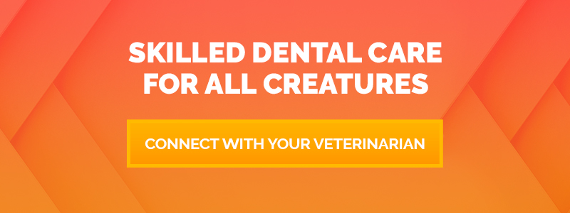 CTA: Connect with Your Veterinarian