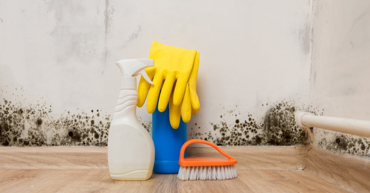 Cleaning Supplies and Mold