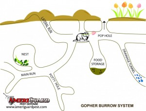 GOPHER-BURROW-ILLUSTRATION-copy-copy-1140x868