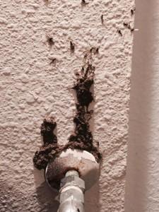 Subterranean Termites Bathroom Water Source