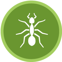 Brookfield ant control and pest management
