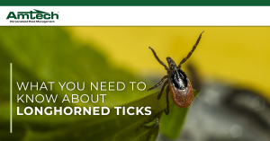 Learn about longhorned ticks and get tick control in Brookfield