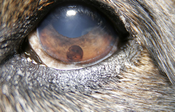 Animal eye care is important to ensure your pet's health. Contact our veterinary eye specialist.