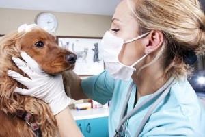 Our premier veterinarian ophthalmologists will keep your pet seeing well. Call today!
