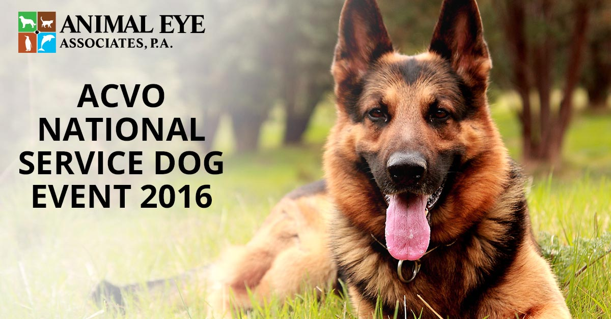 ACVO National Service Dog Exam Event 2016