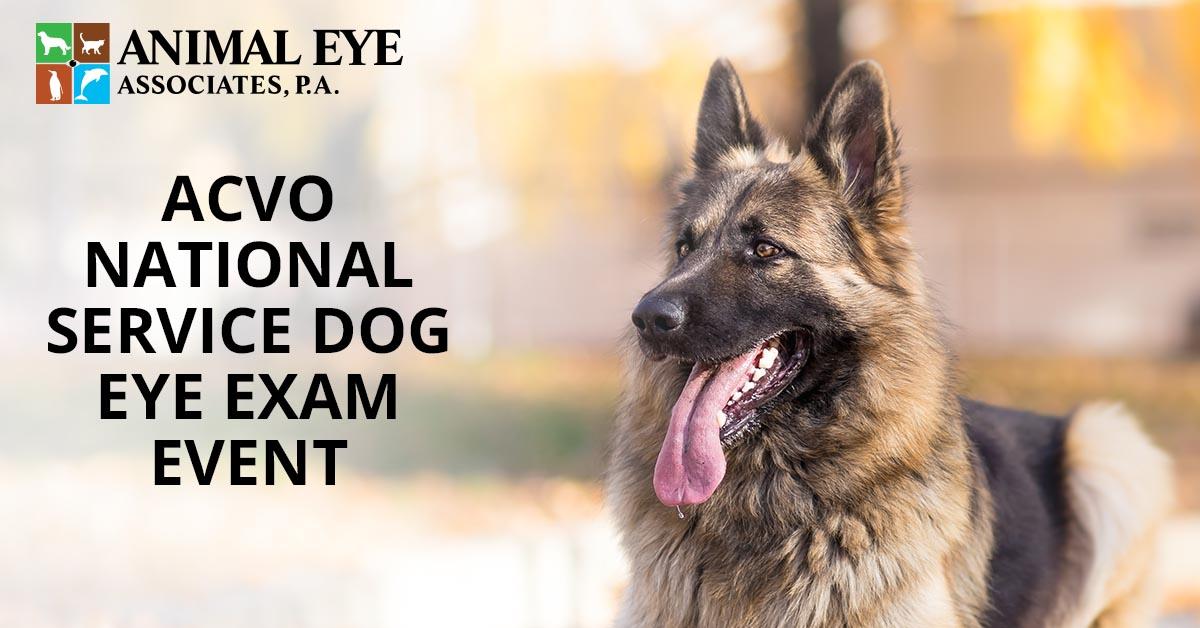 Animal eye exams at the ACVO National Service Dog Eye Exam Event